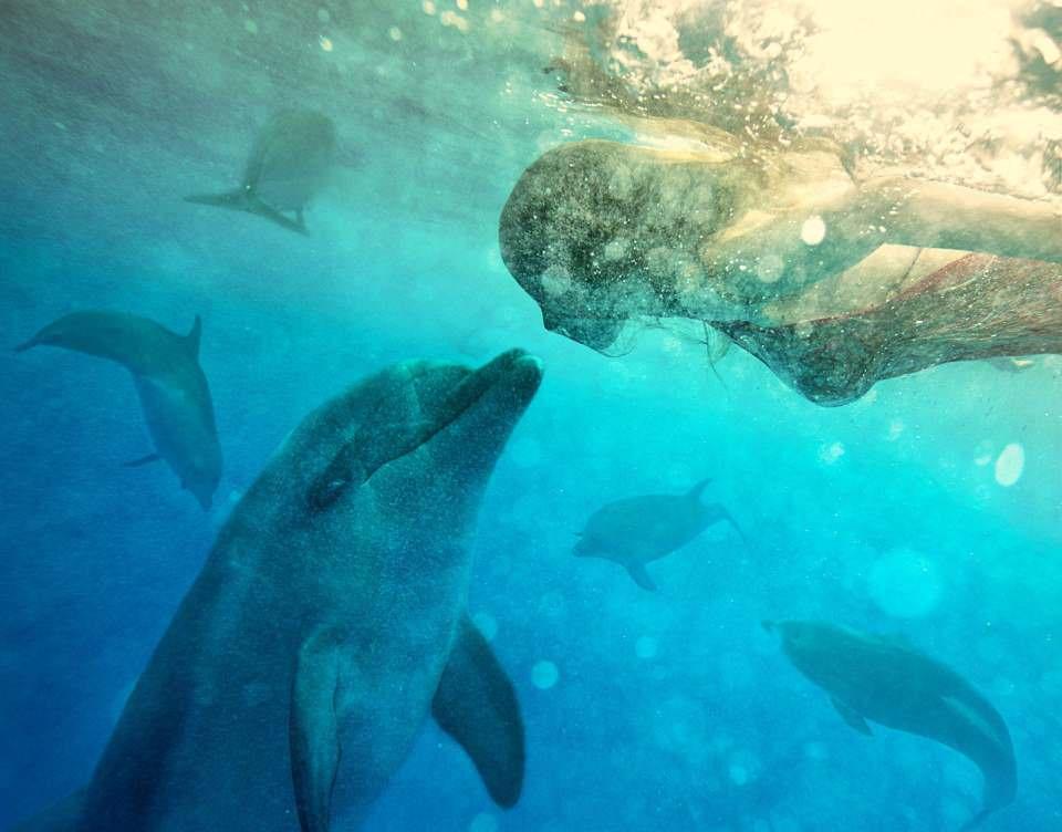 diving-delfin-960x752.jpg